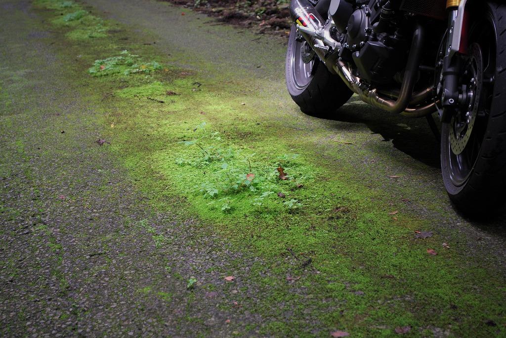 XSR900K&Hハイシート付けてツーリング栃木舗装林道の苔
